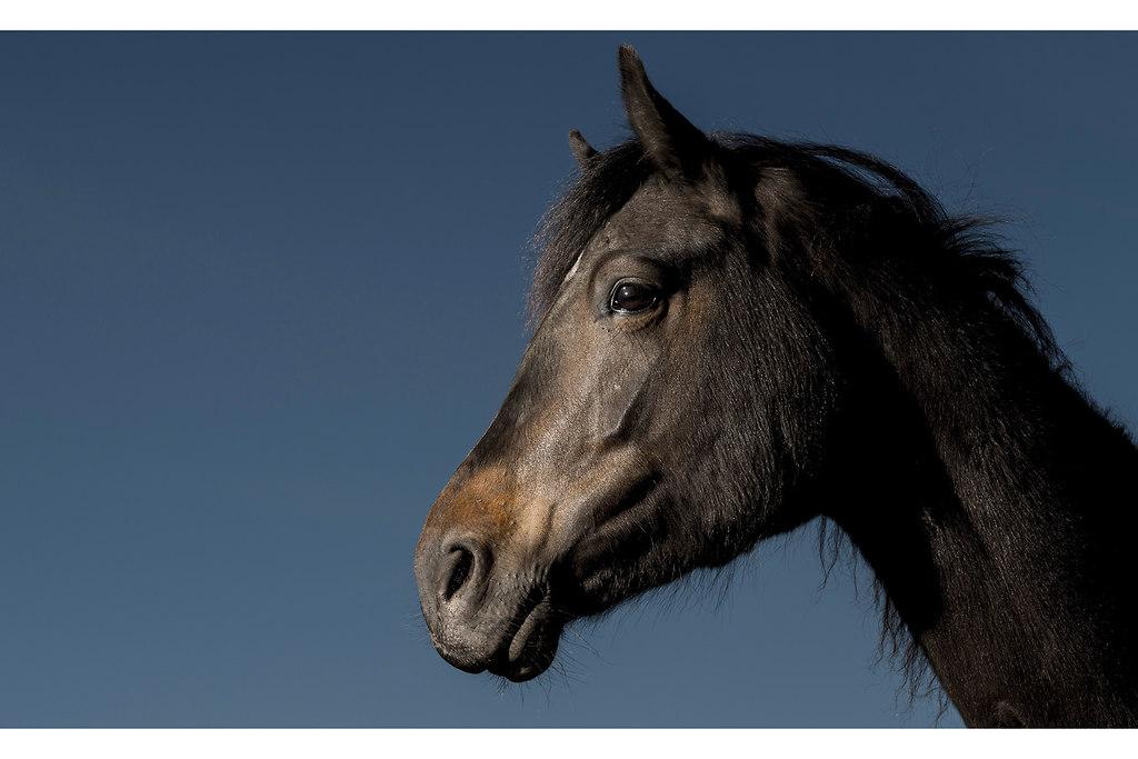 Pferd_2MH9782