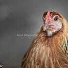 Hühnerbande_7-1_klein
