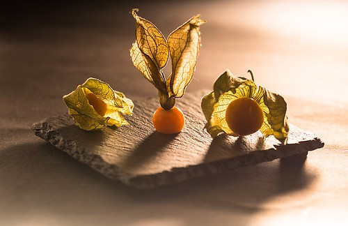 physalis on Bord