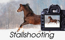 Stallshooting mit Text