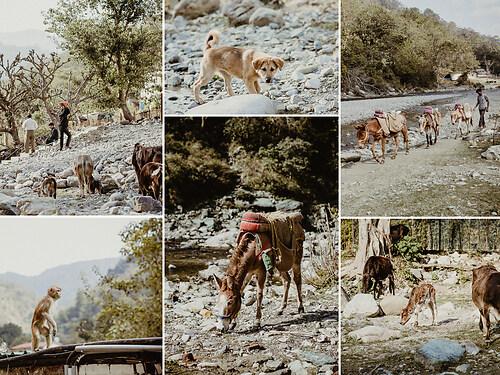 Reisefotografie - Indien - Tiere