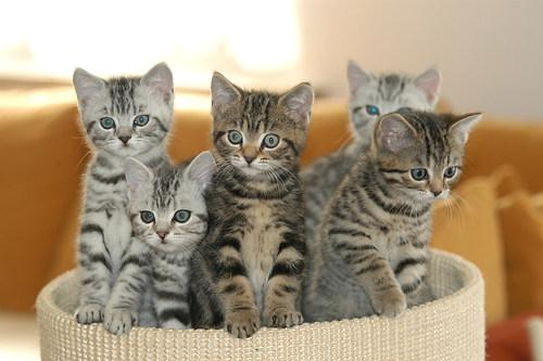 Katzenkinder 2004 2