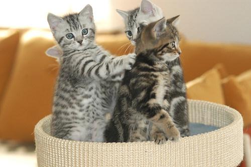 Katzenkinder 2004 3