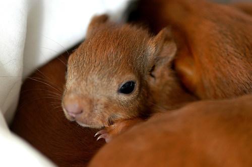 Eichhörnchen JUNGTIER 2003 1