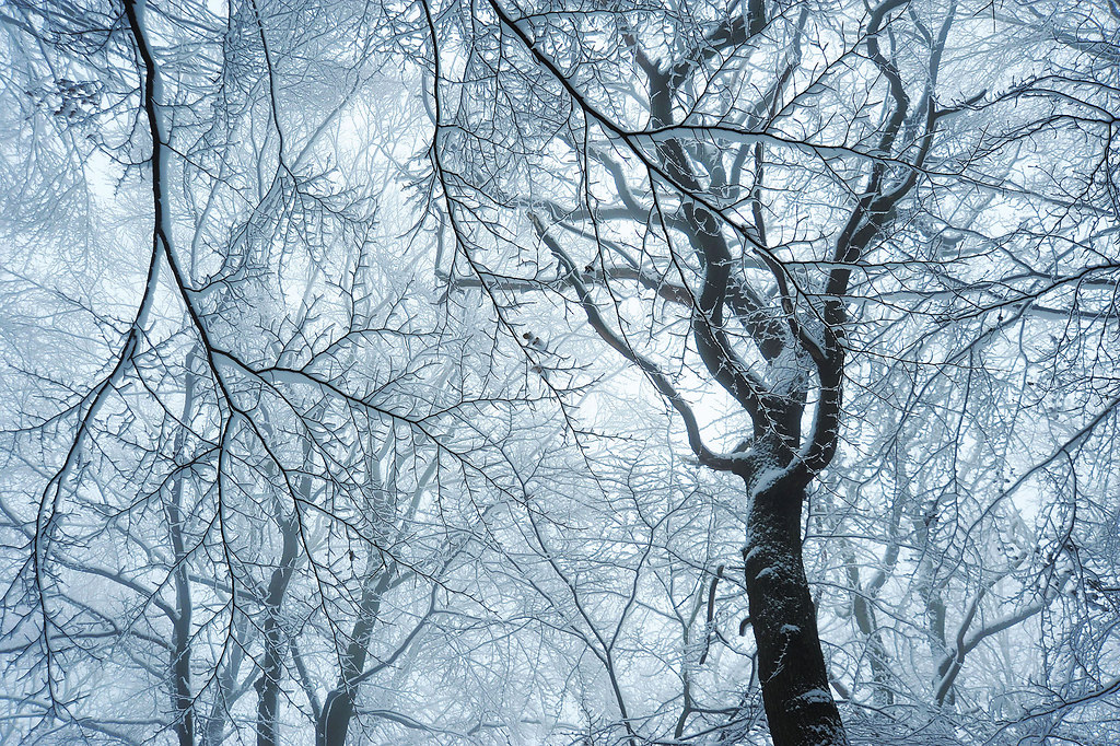Magic forest (Magic forest) | Magical winter forest in a cold winter scene | branches, trees, winter, cold, calm, tranquil scene, no people, forest, low angle view, snow