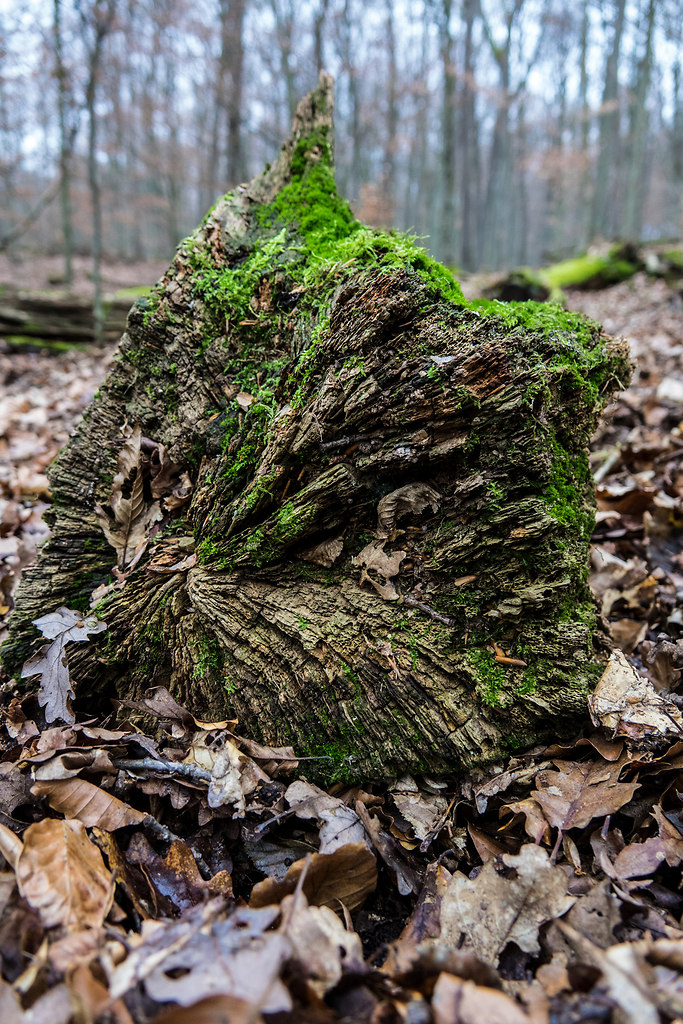 Moss covered I (Moss covered I) | Moss grows on the darker side of trees | nature, tree, forest, close-up, growth, no people, outdoors, textured, tree trunk, day, beauty in nature, branches, fragility, wooden