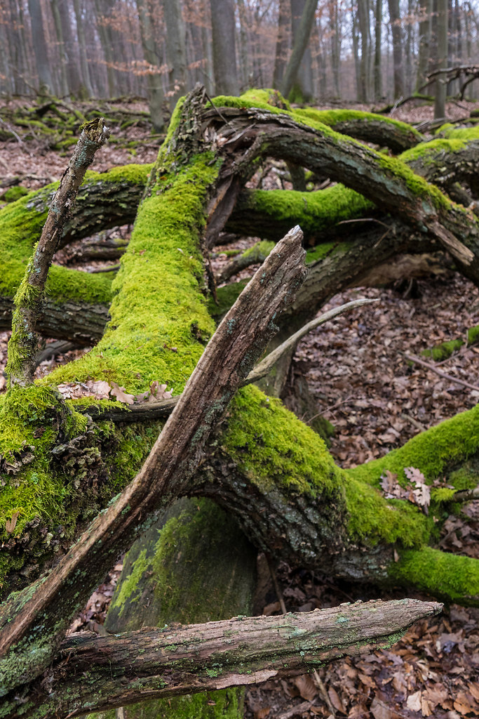 Moss covered III (Moss covered III) | Moss grows on the darker side of trees | nature, tree, forest, close-up, growth, no people, outdoors, textured, tree trunk, day, beauty in nature, branches, fragility, wooden