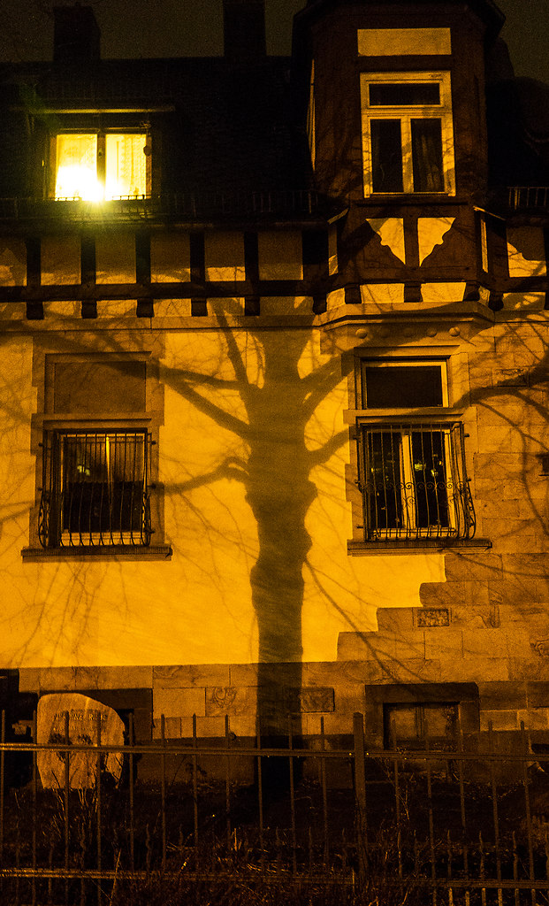 Solanum (Solanum) | a tree casts a shadow on a nightly illuminated wall | exterior wall, shadow, solanum, night, windows, no people, yellow, onlooker, fence, tree