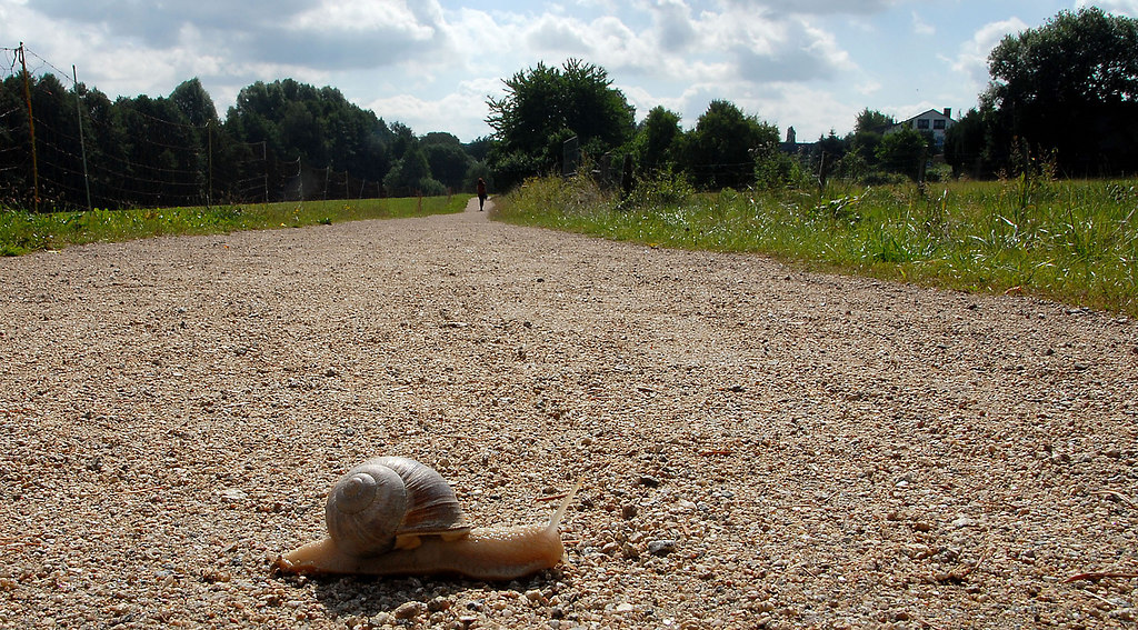 A long way (A long way) | Snail crossing a long way for travelling a very long time | nature, animals, animal themes, trees, sky, field, one animal, outdoors, no people, day, landscape, way, snail, close-up, animals in the wild