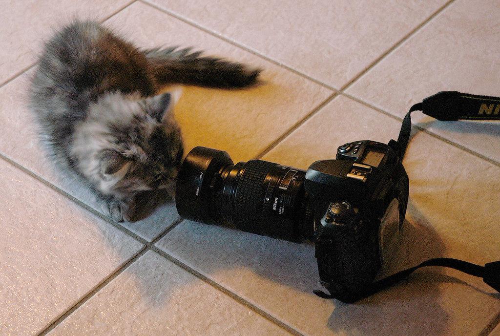 Sissi 2005 05 am So.23.01.2005 als Kameramotiv | Stichwort : Kameramotiv*ORT* RTK*PERSON* Zwˆlf Wochen alte Hauskatze als...