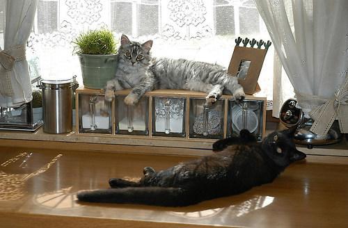 Sissi und Mikesch 2005 04 am Mo.21.03.2005 SONNENBANK