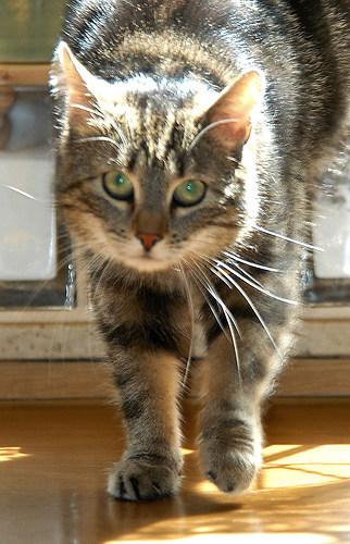 Luna 2005 03 am Sa.02.04.2005 in der Küche