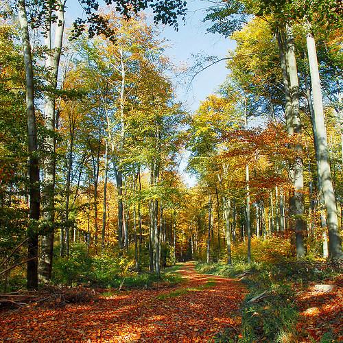 Beautiful forest trail (Beautiful forest trail)
