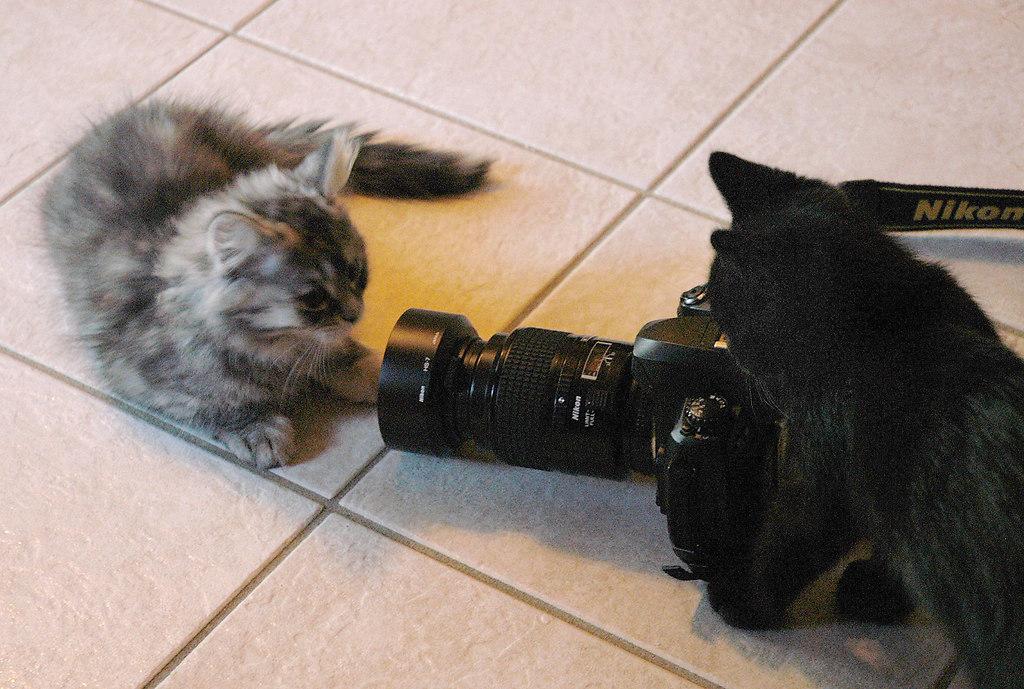 Sissi und Mikesch 2005 02 am So.23.01.2005 FOTOGRAF | Stichwort : Freundlich*ORT* RTK*PERSON* Mikesch rechts versucht sein Geschwisterchen Sissi ins...