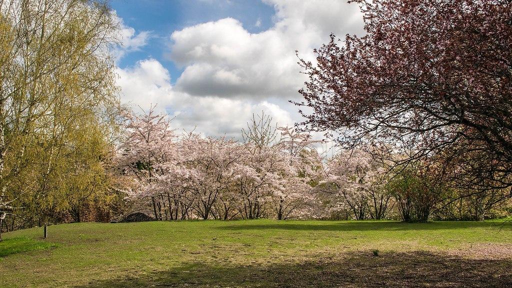 Gärten der Welt | Kirschblüte in den Gärten der Welt | Welt, Gärten, Kirsche