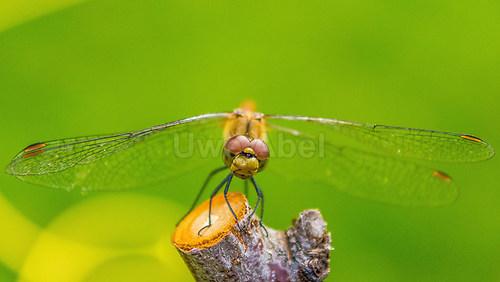 dragonfly (1 von 1)-9