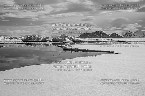the bylot island floe edge