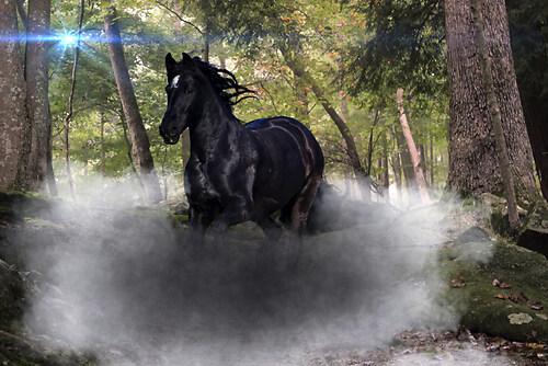 Horse_wood