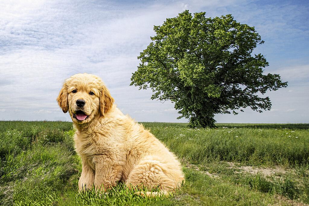 Cooper_tree | Cooper
