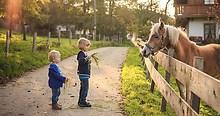 kinderfotografie_pferd_haflinger