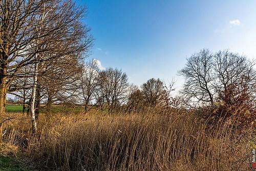 Frühling-Elster_20140326_16-44-00_004