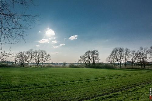Frühling-Elster_20140326_16-47-32_007