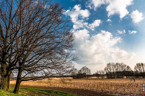 Frühling-Elster_20140326_16-59-14_014