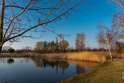 Frühling-Elster_20140326_17-16-38_018