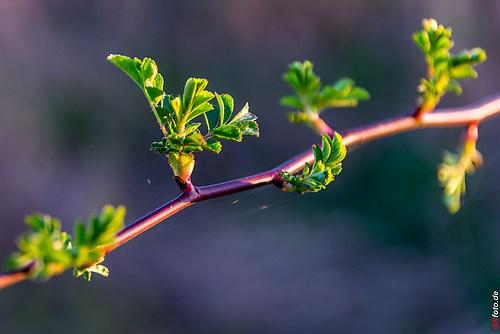 Frühling-Elster_20140326_17-21-54_022