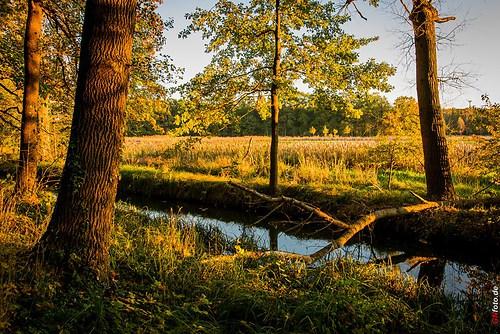 Herbst2014_Schlosspark_20141028_17-16-40_006