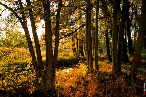 Herbst2014_Schlosspark_20141028_17-18-38_007