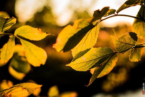 Herbst2014_Schlosspark_20141028_17-19-25_008