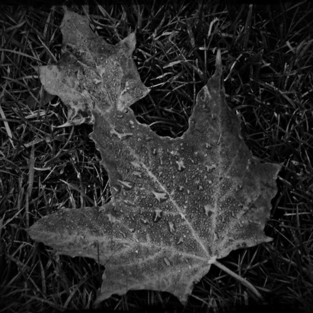 Leaf | Herbstlich