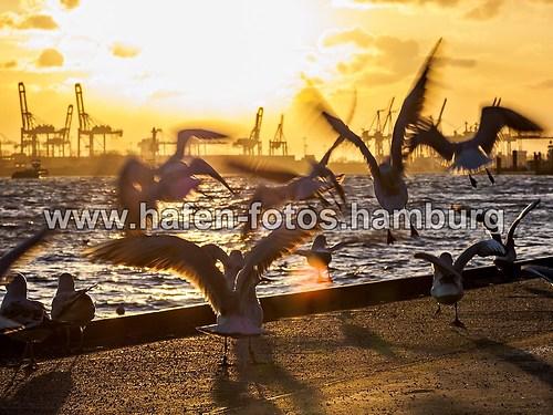 postkarte 10,5 x14,8 2015-03-02 landungsbrücken 203