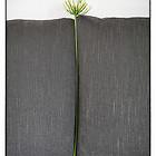 einzelne_Blume