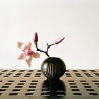 blume (magnolie )