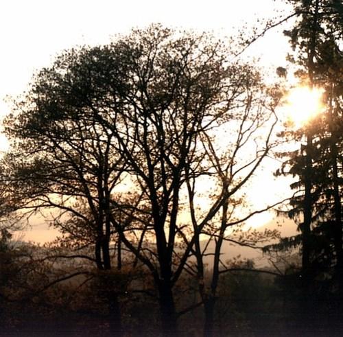 sundown #5