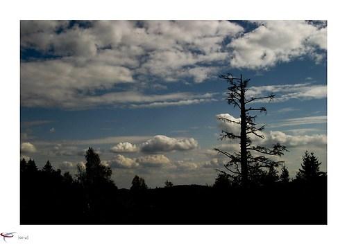 wald-himmel