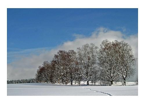 winter am dellenfeld