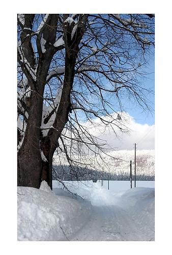 winterstrasse am ulmenfeld