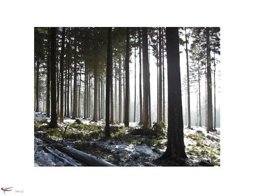 lichterwald