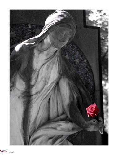 die_letzte_rose