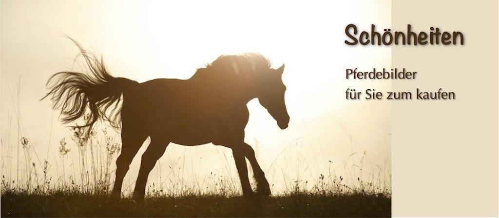 Slider_Bilder | Pferd galoppiert als Silhouette vor der Sonne | Pferdefoto, Bild Pferd, Silhouette, Galopp