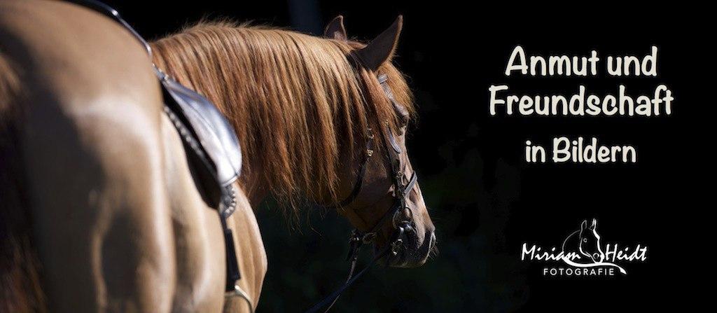 Slider_Heidt_Fotografie | Portrait eines Pferdes vor schwarzem Hintergrund | Pferdekopf, Portrait, Pferdefoto, Pferd Bild, Araberberber, Kontrast, Pferdefotografie, Heidt