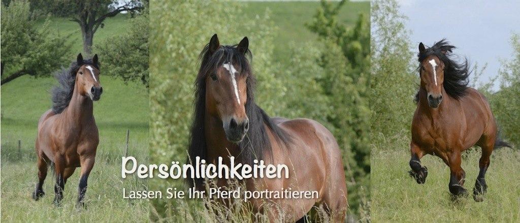Slider_Pferde