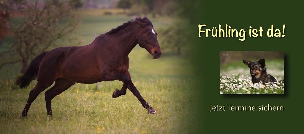 Fotoshooting Pferd im Frühling Angebot