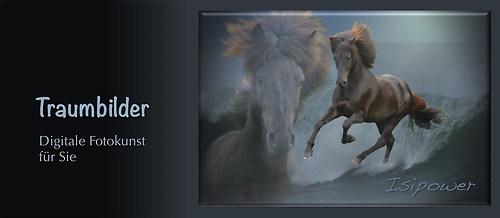 Pferdefotografie Fotokunst Isländer auf Welle