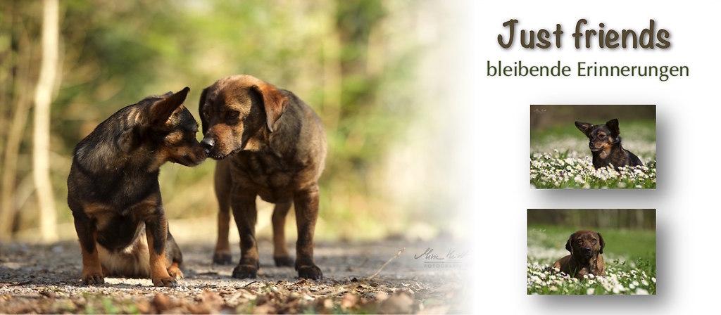 Slider_Fotoshooting_Hunde