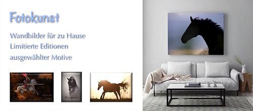 Wandbilder Pferdefotos