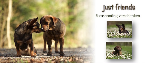 Fotoshooting Hunde
